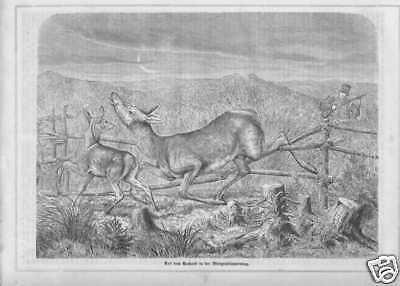 Auf dem Anstand Jagd Rotwild HOLZSTICH von 1862