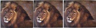 Henry's Lions Den