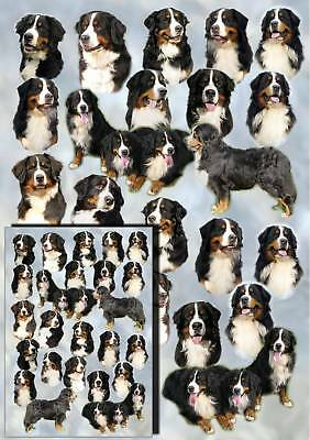 Bernese Mountain Dog Gift Wrapping Paper By Starprint