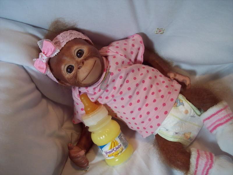 Reborned Bindi Orangutan Made To Order