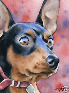 MINIATURE-PINSCHER-Dog-Watercolor-8-x-10-ART-Print-Signed-by-Artist-DJR