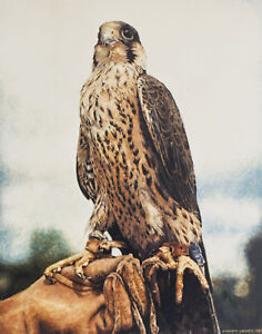 Peregrine-Falcon-SIGNED-LTD-EDITION-PRINT-Steve-Greaves-Falconry-Bird-Painting