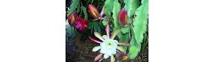 Mila's Succulent Garden and Stuff