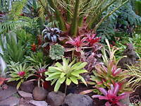 Many Bromeliads Especially Nowadays With Global Temperatures Rising Will Do Well Outdoors In European Climates Some Species Are More Cold Tolerant