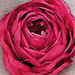 vintage-english-rose*