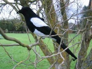 FLOCKED-MAGPIE-DECOY-LARSEN-TRAP-DECOYING-SHOOTING-FAKE-BIRD-CALL-PEG-A1-UK