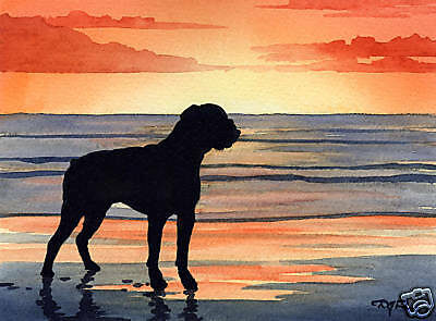 BOXER SUNSET Watercolor Painting 8 x 10 ART Print Signed by Artist DJR