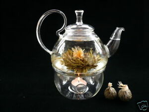 Glass Teapot + Warmer + 12 Blooming Flowering Tea A