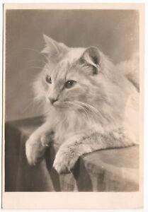 Vintage-Old-GERMANY-GERMAN-Photo-Postcard-CAT-1940s