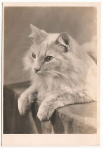 Vintage Old GERMANY GERMAN Photo Postcard CAT 1940s