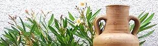 Oleanders Online-Oase