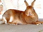 rabbits70