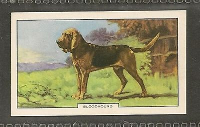 Rare 1938 UK Dog Art Photograph Second Series Gallaher Cigarette Card BLOODHOUND