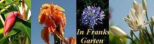 In Franks Garten