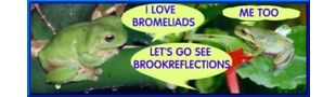 brookreflections BROMELIADS+Exotics