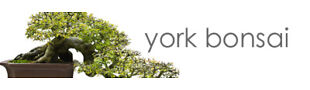 York Bonsai