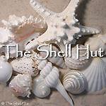 shellhut