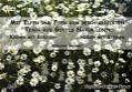 Mit Elfen und Feen am reichgedeckten Tisch aus Gottes Natur leben von Sieglinde Grommet (2007, Kunststoffeinband)