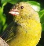 birdingbeyondboundaries
