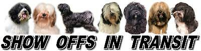 TIBETAN TERRIER Show Off Dog Car Sticker by Starprint