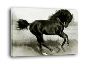 HORSE-CANVAS-ART-PRINT-PICTURE-black-amp-white-mounted-A2
