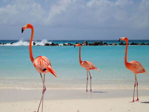 Aruba-Renaissance-Vacation-Timeshare-4-Weeks-For-Sale-46-47-25-26
