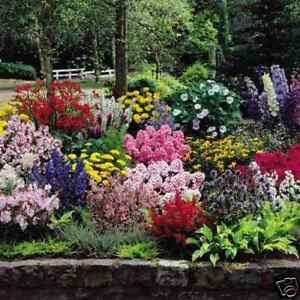 COTTAGE GARDEN MIXTURE 60 seeds colourful flowers