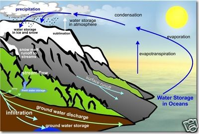 The Water Cycle - Science Poster