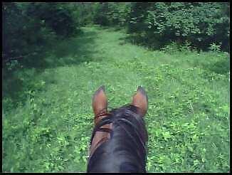 Cyndyhorses