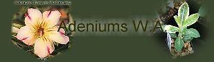 Adenium WA