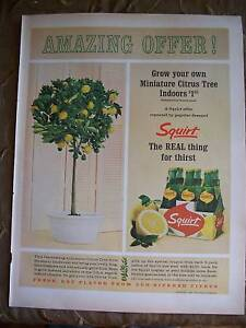 1964-Squirt-Soda-Carton-Miniature-Citrus-Tree-Ad