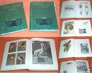 NN-1902-3-TWO-VOLUMES-ANIMAL-LIFE-BOOKS-LOVELY