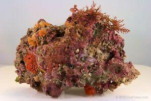 20-lbs-of-Primo-Deco-Florida-Live-Rock-coral-AQUARIUMS