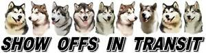 ALASKAN-MALAMUTE-Show-Off-Dog-Car-Sticker-By-Starprint