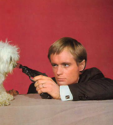 Man From Uncle David Mccallum And Cute Pooch  Bow Wow Affair  Photo