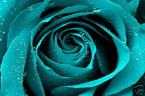 TURQUOISE-ROSE-CANVAS-ART-FLORAL-BOX-WALL-PICTURE-A1