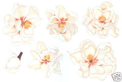 MAGNOLIA FLOWERS WALL DECOR CREATIVE ART TRANSFER DECALS TATOUAGE