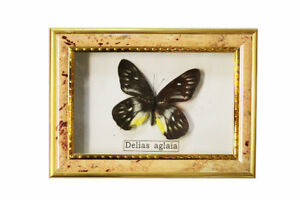 7-034-Real-Vintage-Butterflies-Framed-Collection-Gift-01s