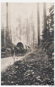 mule-train-covered-wagons-in-woods-1920s-8x10-reprt