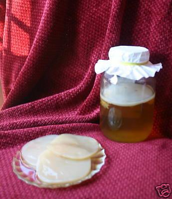 Manchurian Organic Kombucha Mushroom Scoby Culture - Selling Cultures 7+ Yrs