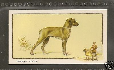 1934 UK Dog Art Full Body Gallaher Cigarette Card Natural Ears Fawn GREAT DANE