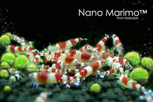 Nano-Marimo-Ball-x5-Cherry-Crystal-Red-Shrimp-Aquarium