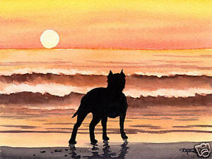 PIT-BULL-TERRIER-SUNSET-Painting-8-x-10-ART-Print-Signed-by-Artist-DJR