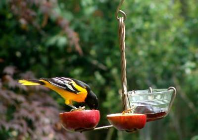 Copper & Glass Fruit Jelly Bird Oriole Feeder Glass Cup Apples Oranges Mealworms