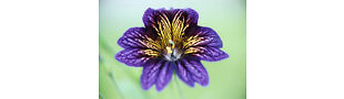 CHERYL'S UNIQUE FLOWER SEEDS