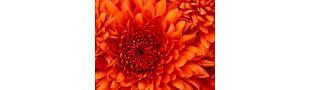 stephanie's floral's
