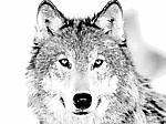 badd-wolf