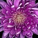 flowersgreen1
