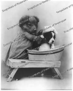 Vintage-photo-Puppies-Taking-Bath-Dog-Washtub-8x10-in