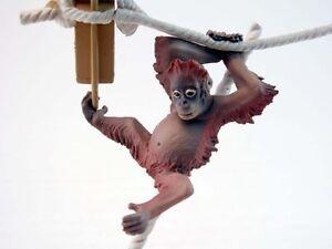 Wildlife-Animal-Endangered-Species-Planet-Orangutan-Kid